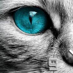 Wanduhr XXL 3D Optik Dixtime blaue Augen Katze 50x50 cm leises Uhrwerk GQ-015