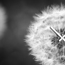 Wanduhr XXL 3D Optik Dixtime schwarz weiß Pusteblume 50x70 cm leises Uhrwerk GR-042